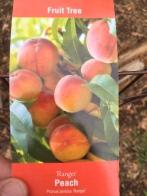 "Ranger Peach - Prunus persica ""Ranger"""