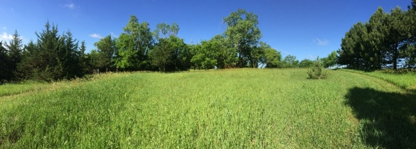 Kochers' Six Acre Woods Looking West