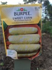 Sweet Corn - Bi-Licious