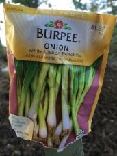 Onion - White Lisbon Bunching