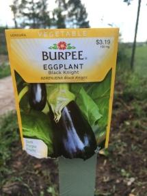 Eggplant - Black Knight