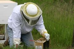 Removing Queen Bee