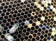 Bee Emerging #2