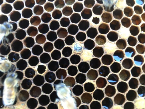 Bee Emerging #1